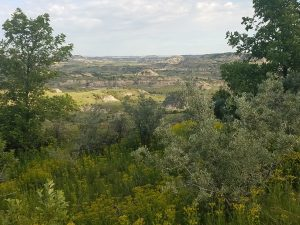 Theodore Roosevelt National Park, Medora, North Dakota
